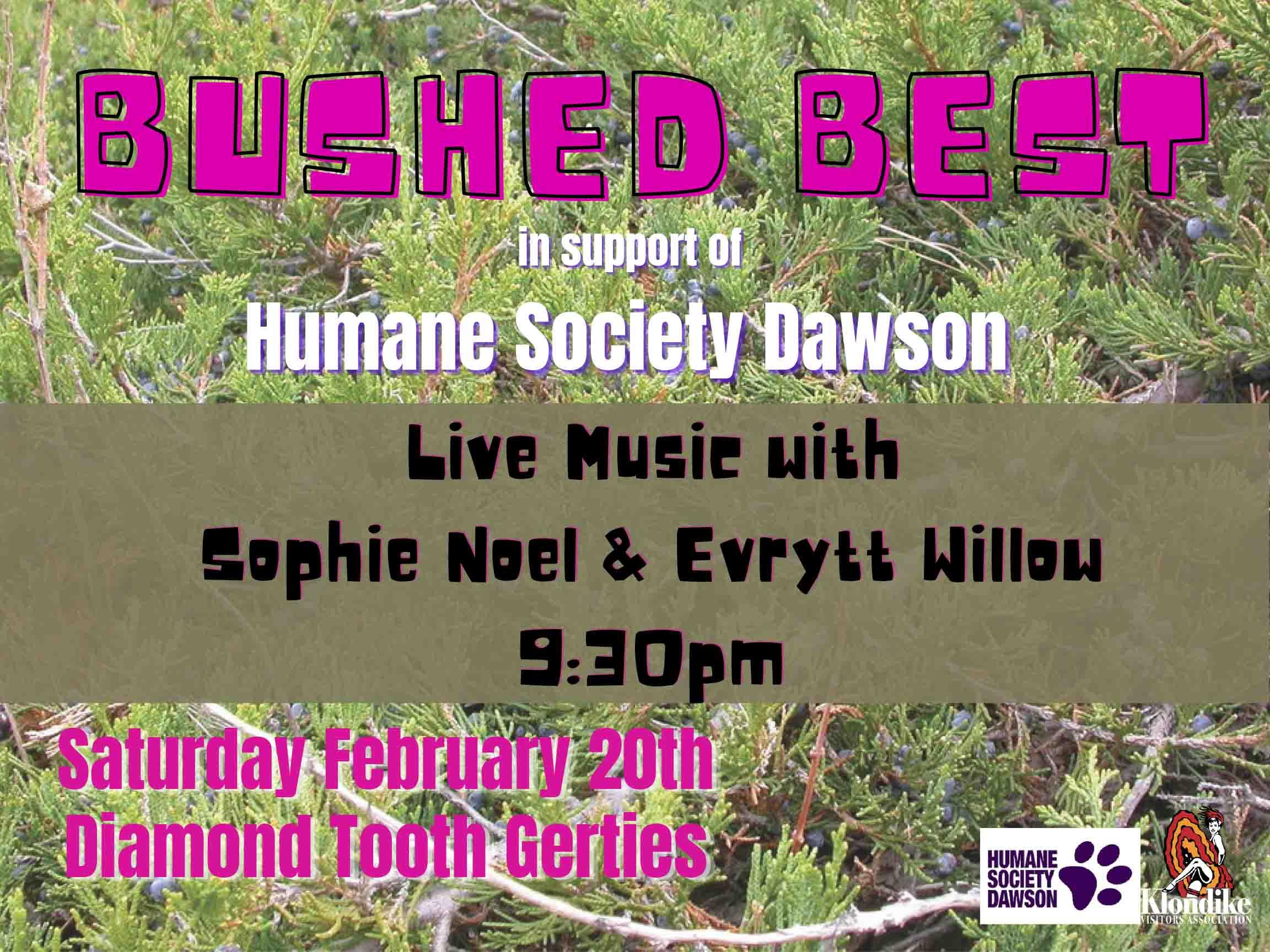 Bushed Best Humane Society Dawson Live Music